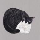 白黒猫 hisayo azuma