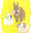 いろんな犬 hisayo azuma