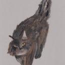 タヌキ猫 hisayo azuma