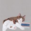 のせ猫 hisayo azuma